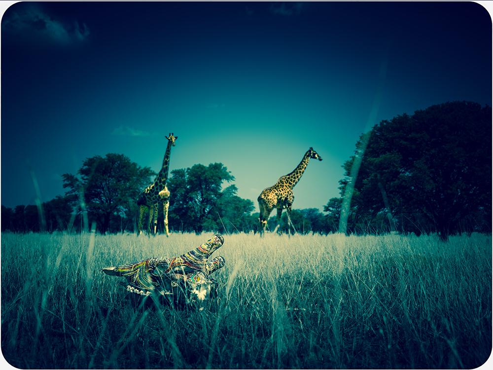 Picture 5 (Giraffes)