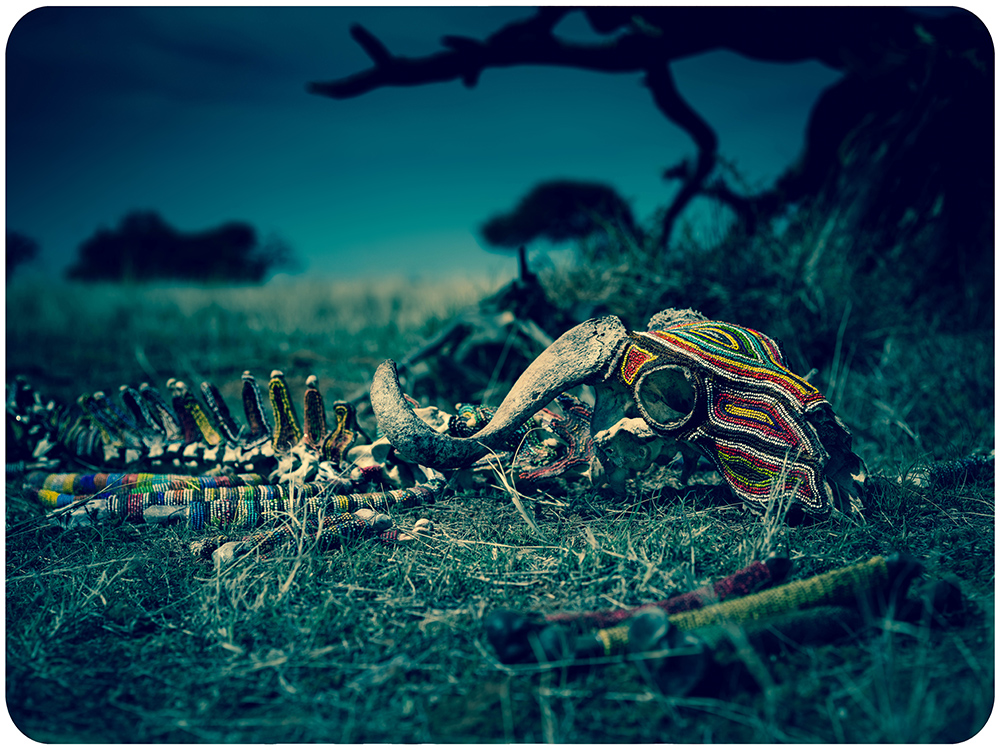 Picture 7 (Wildebeest Skeleton)