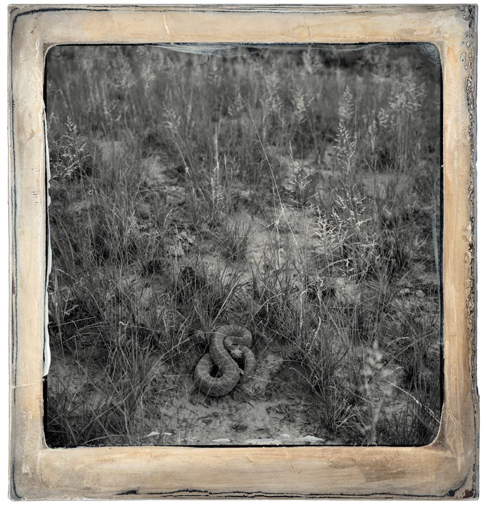 plate 96s.84.4 Snake