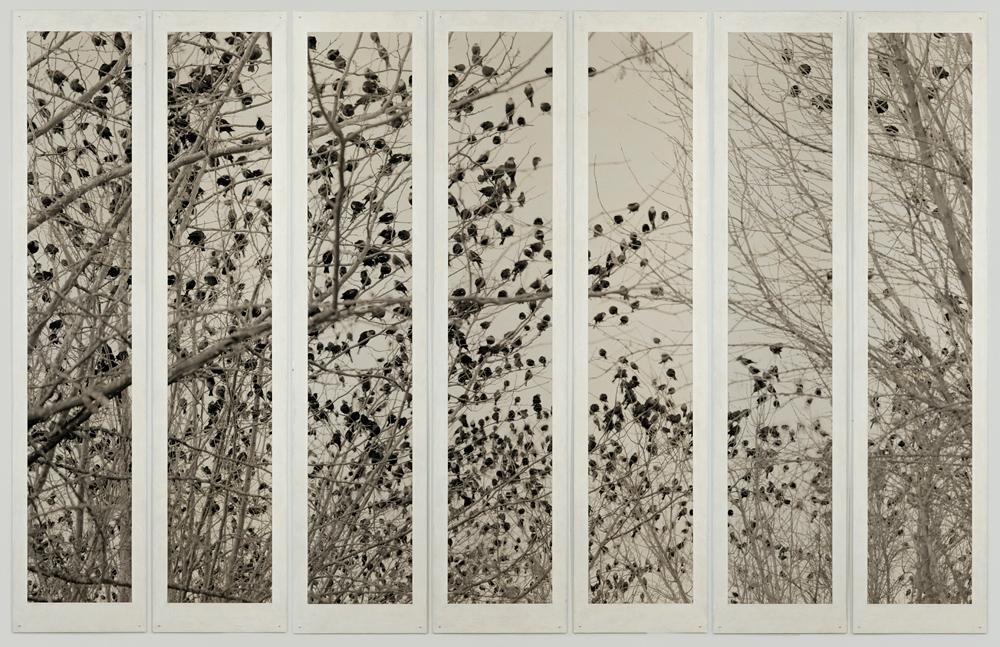 plates 07p.113 Birds Janos - 7 Plates 2016 75x117