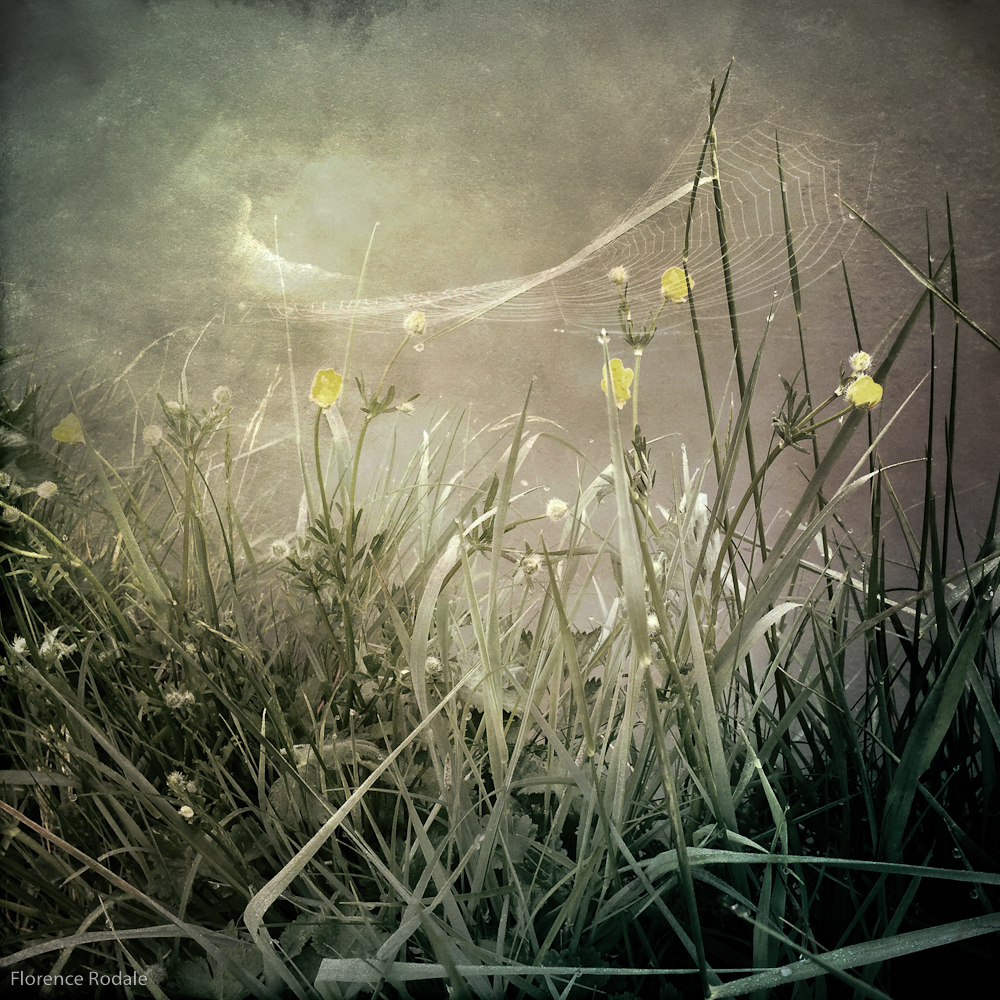 Grasses II RodaleFlorence