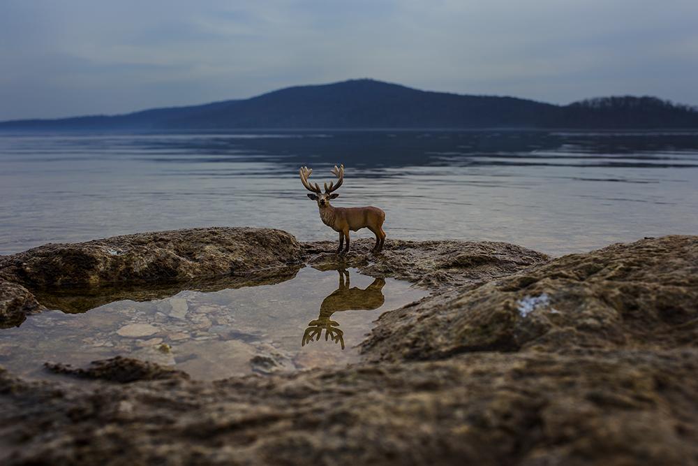 ©DeAnn Desilets, Buck