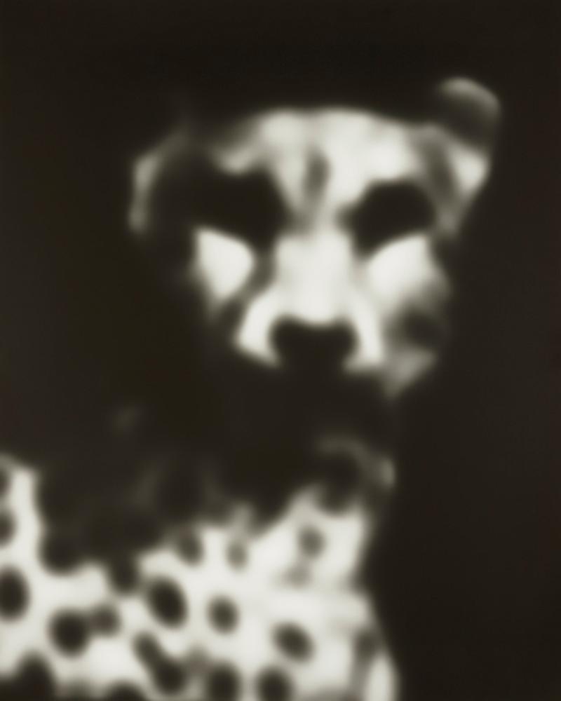 stivers_Cheetah