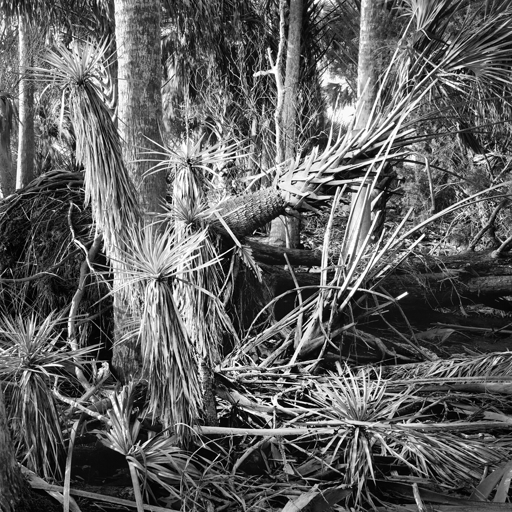 #13_Palms & Yuccas, Unnamed Island