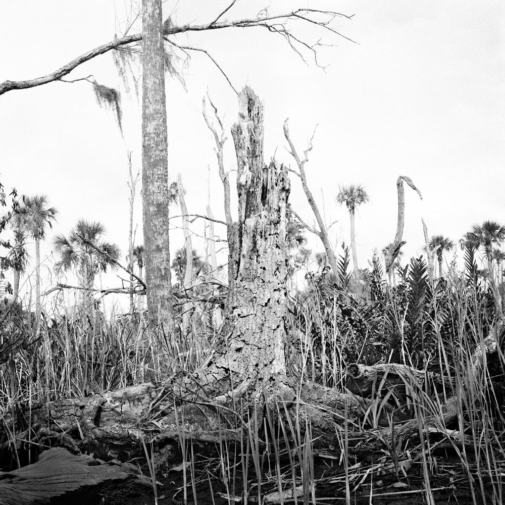 #15_Stump & Dead Trees, Crawford Creek