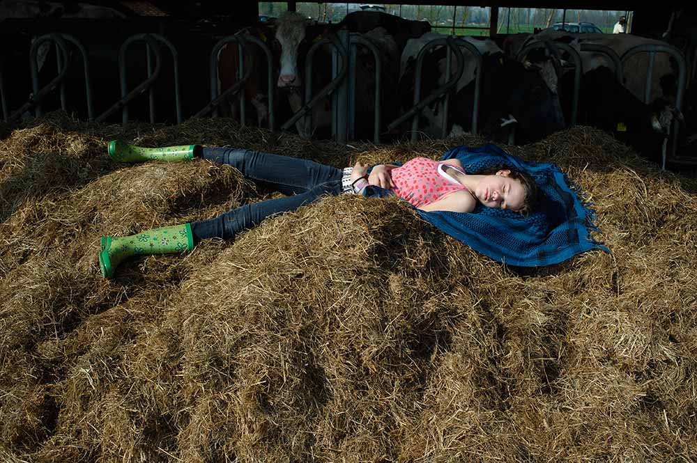 Visiting day for city people who are participating in the Adopt a Cow program. The granddaughter of adoption friends Ronald and Evelyne Geurts is dozing on a pile of silage in the cow barn. De Beekhoeve, April 2009, from the book The Other Farm