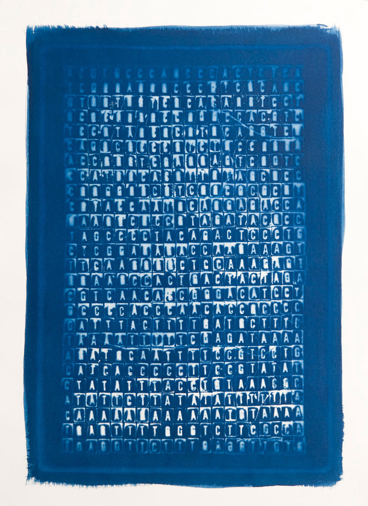 "The Code that Kills, 2009, Cyanotype, 20"" x 14"""
