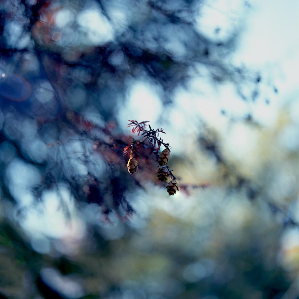 17_pinecone