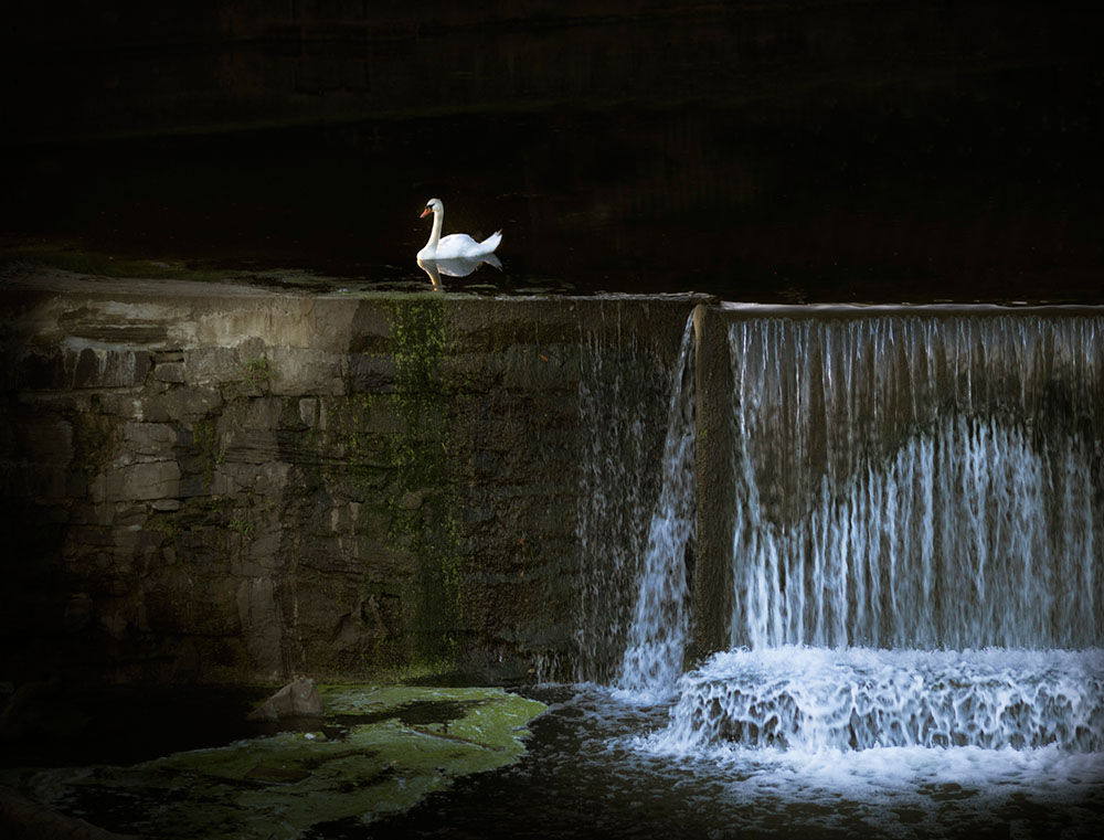 Swan and Spillway