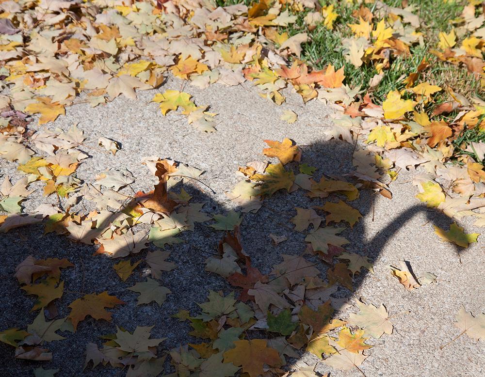02_PollyGaillard_WheelchairShadow