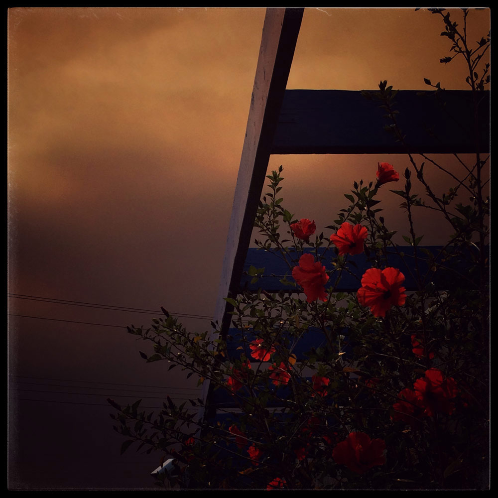 160723_©SafiAliaShabaik_Summer-Wildfires_v2 2