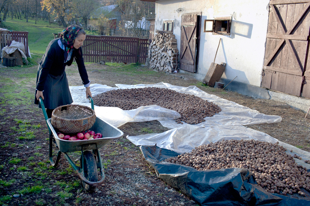 Matyas_Romania_ Walnut Season