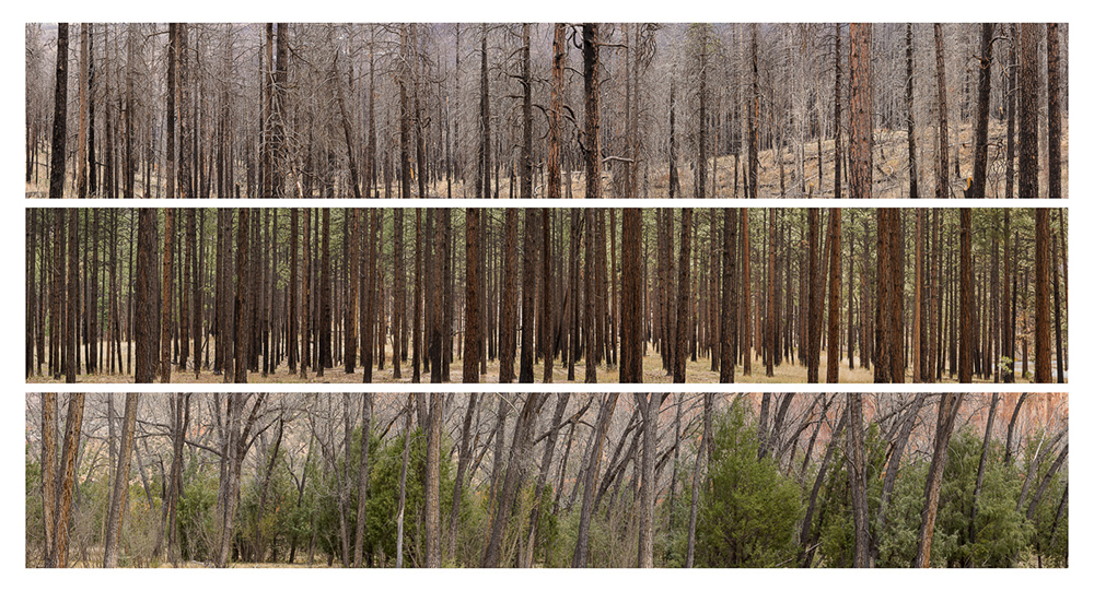 04_pine-cottonwood-study-1-santa-fe-national-forest