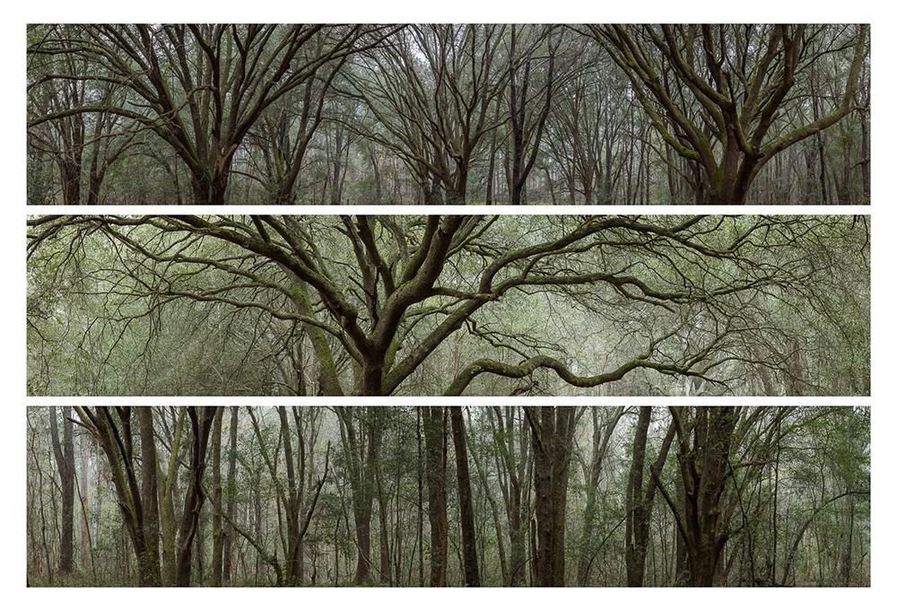 06_oak-study-3-ringhaver-park
