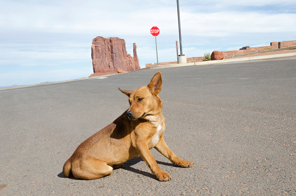 Dog. Monument Valley. Arizon