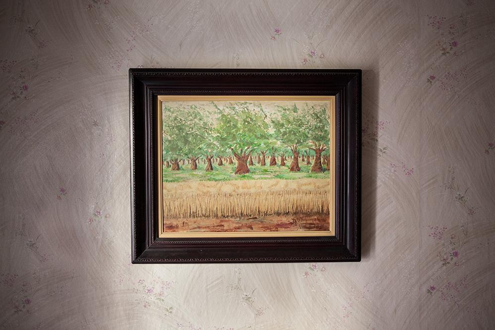 olive-trees-2012