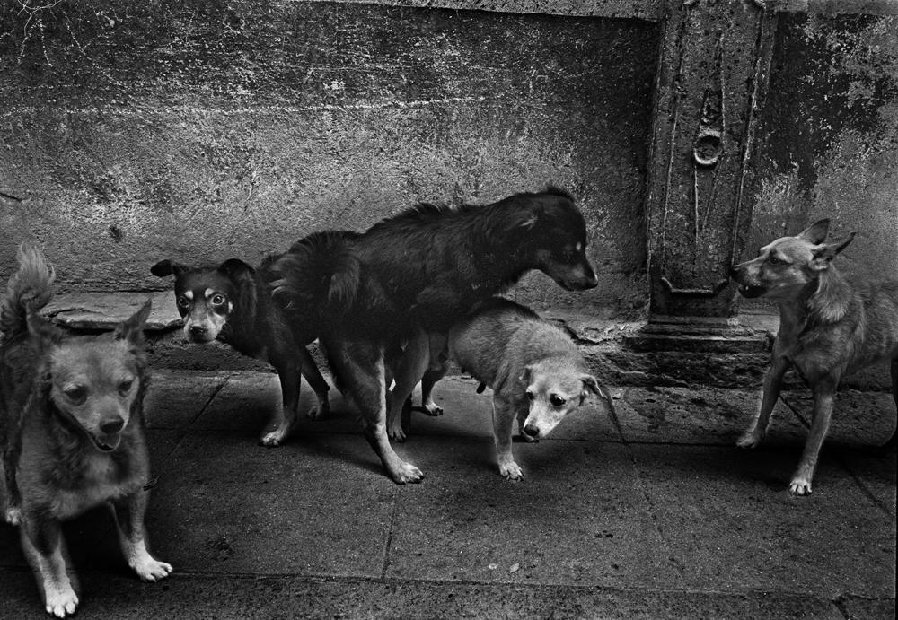 37_sidewalk-quintet