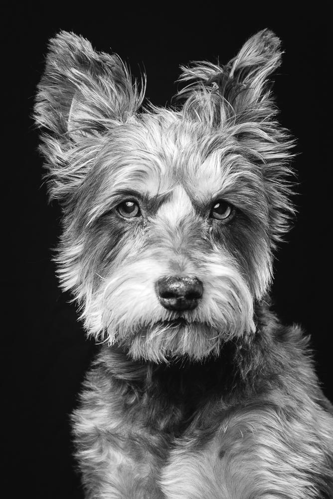 rowland_pets