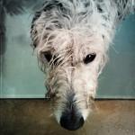 skeeter-bath-day