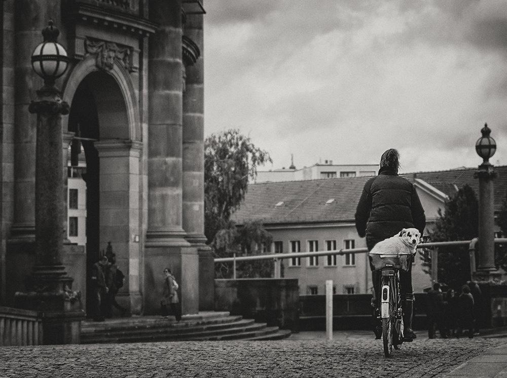 cycling_canine_jkohatsu