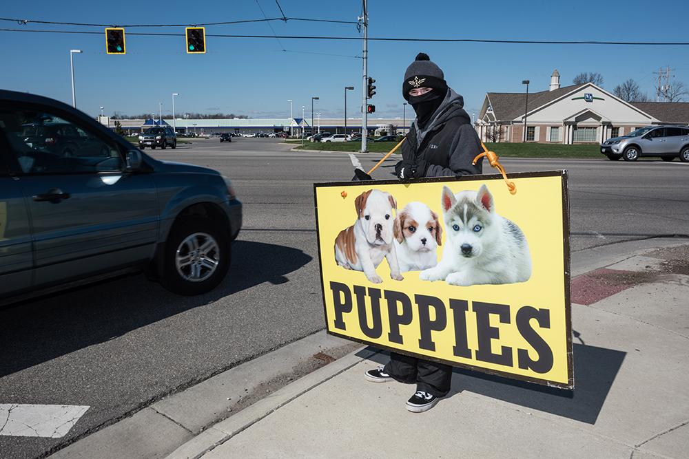 puppy-salesman-9301-yospyn