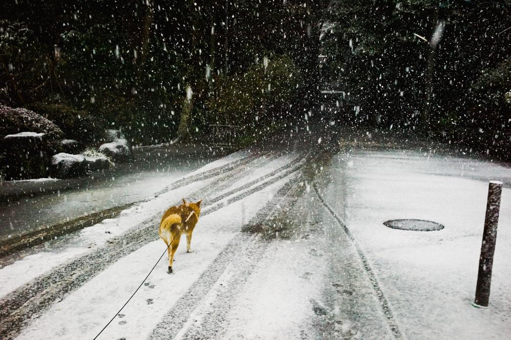 shin_noguchi_animals