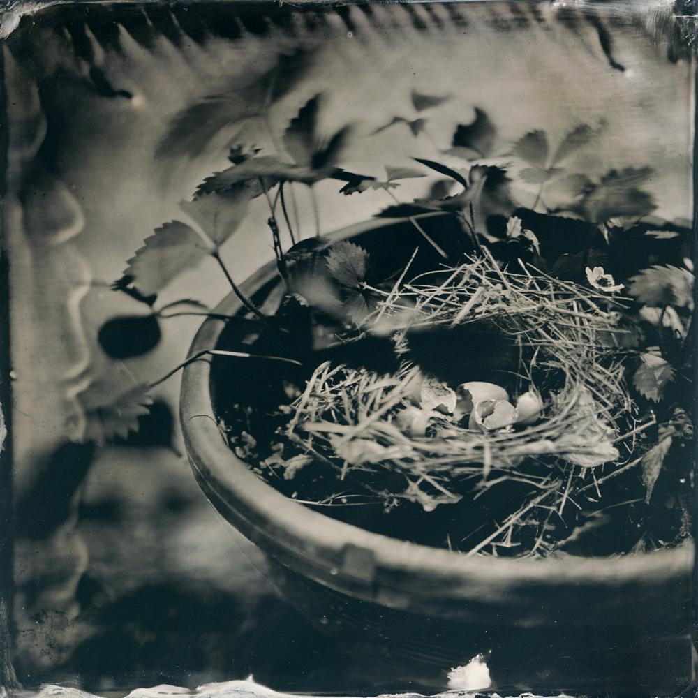07_bird_nest_tintype