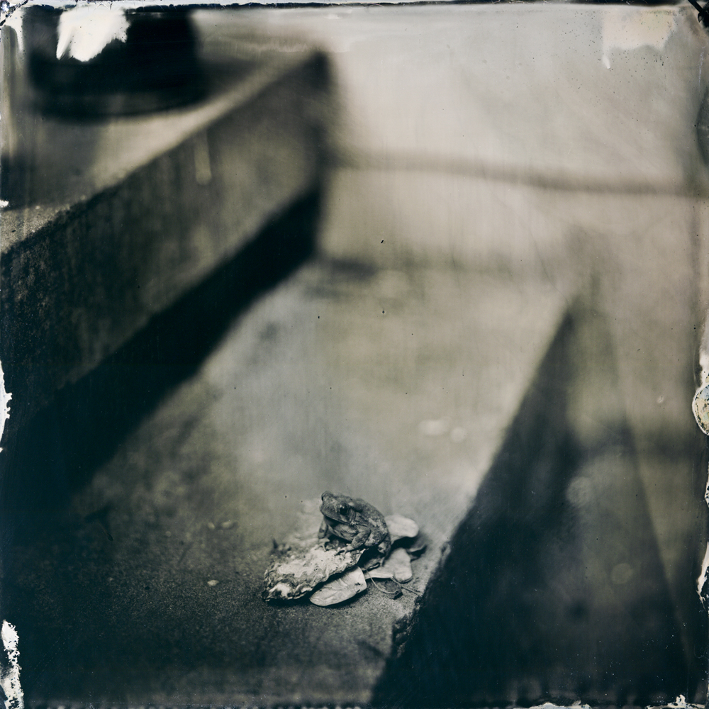 12_toad_tintype
