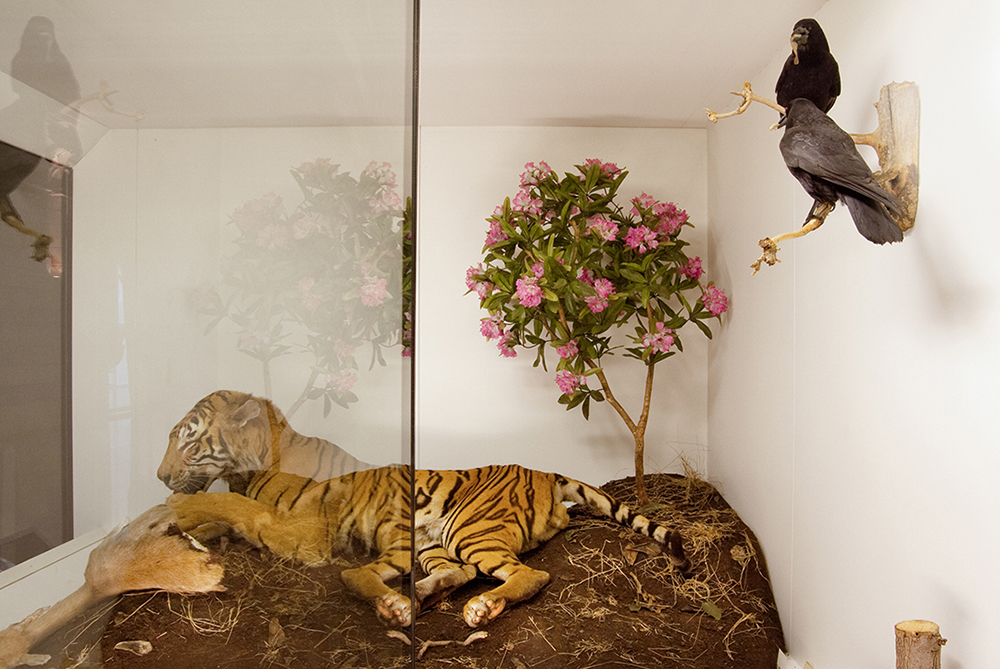 Tiger and Flowers, Natural History Museum, London, England 2009