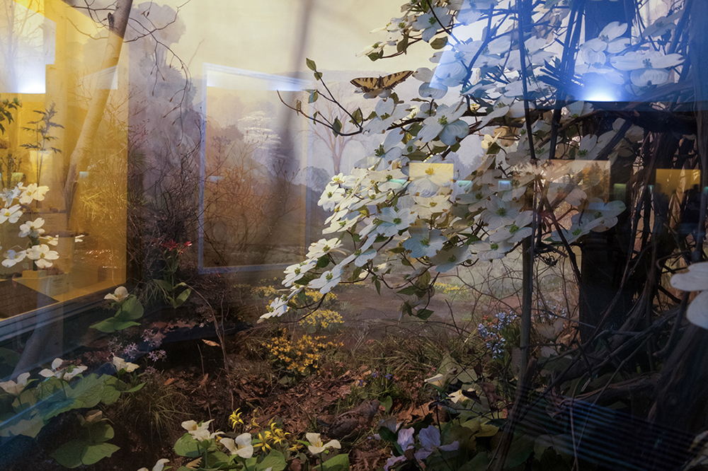 Dogwoods, Carnegie Museum of Natural History, Pittsburgh, Pennsy