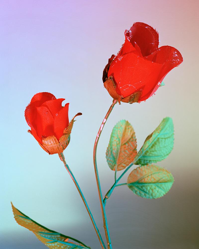 09.Moods (rose)