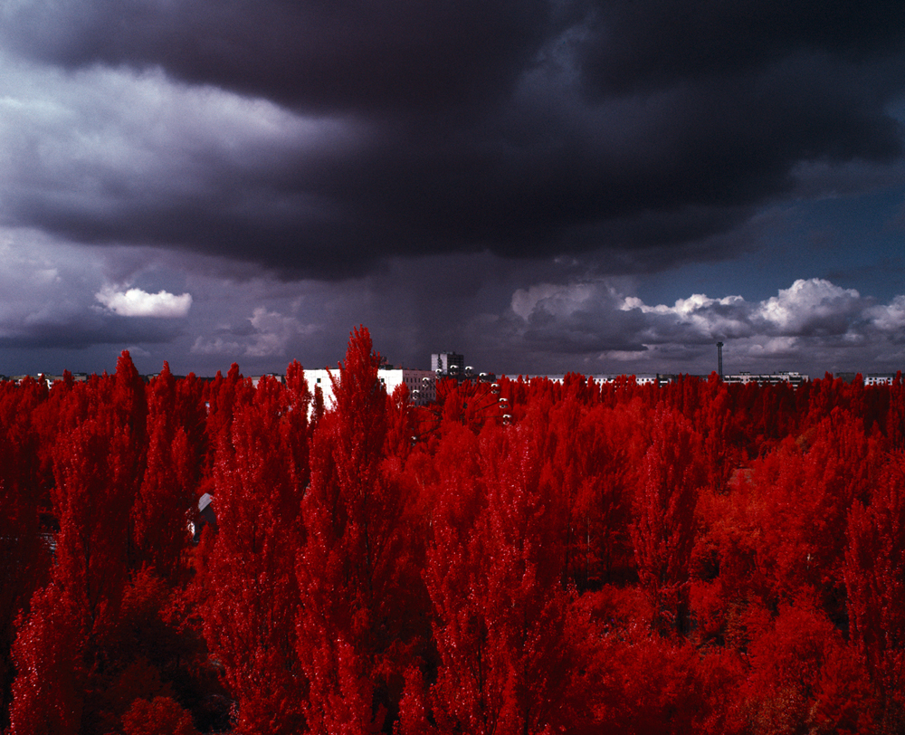 The Red Forest. 2012. On April 26th 1986 there was an explosion at the Chernobyl nuclear power station, reactor number four spewed out huge amounts of radiation contaminating soil, water and atmosphere with the radiation equivalent to 200 times that of the atomic bombings of Hiroshima and Nagasaki. The wind blew most of the radioactive fallout onto Wormwood Forest that was within the 10km surrounding the power station. The pine trees of Wormwood took on massive quantities of radiation (as much as 8000 roentgens an hour) and died, but there was a side effect to the contamination, the trees turned bright red. Wormwood Forest no longer exists; it's now called The Red Forest.  The Red Forest is one part of a project made up of three experimental photo-series using the last rolls of infrared colour film on the planet.  As well as using the film for what it was originally designed for the project also aims to find other alternative uses for the film and subverting its original intended purposes.