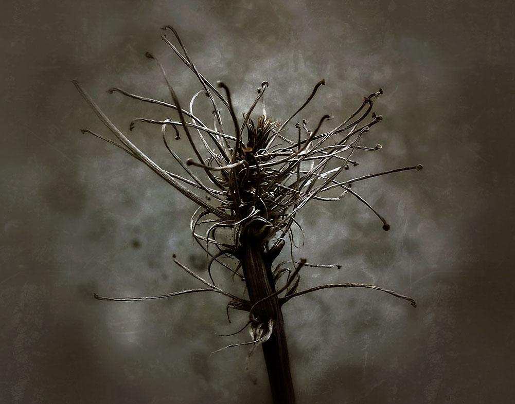16-Angst_Memory_pods_2014_Stockdale