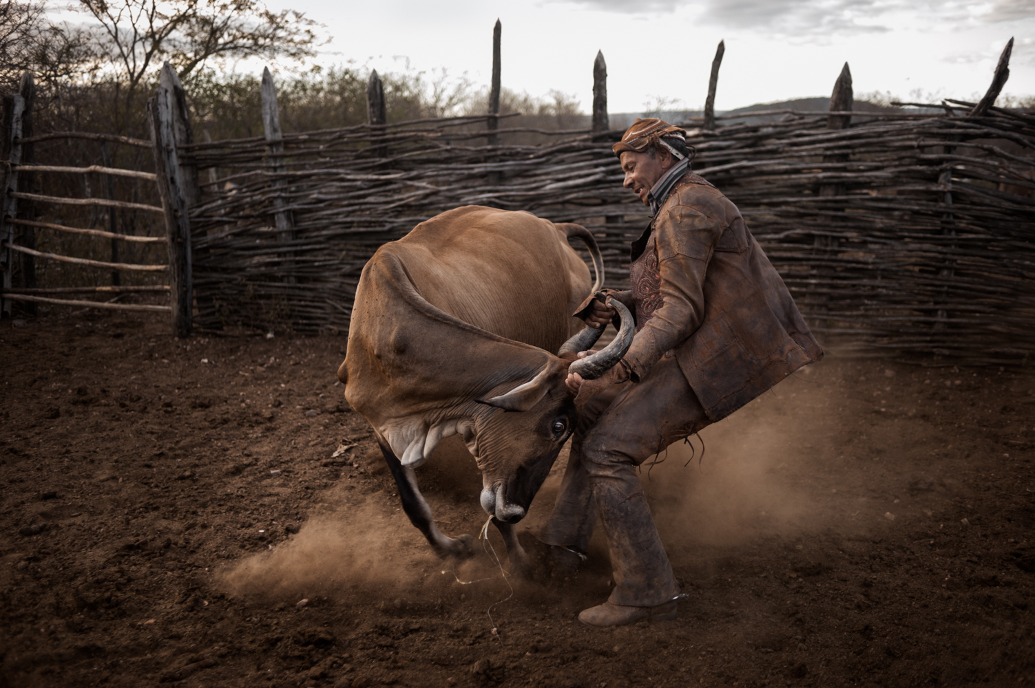 "Handling cattle in the tough ""Sertao"""
