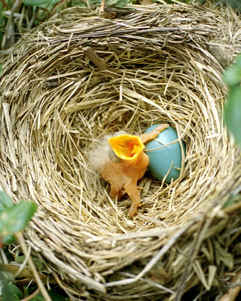 Kaur_BabyBird
