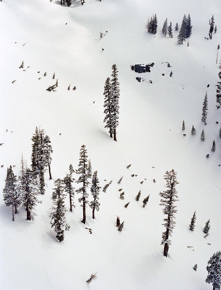 Kaur_SnowTrees