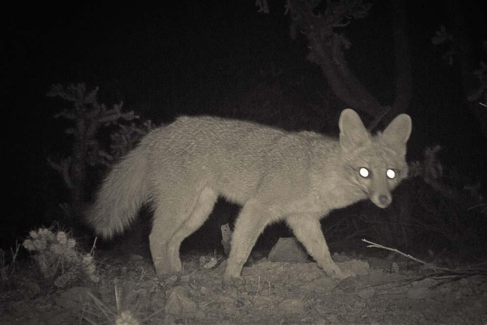 06_Fox