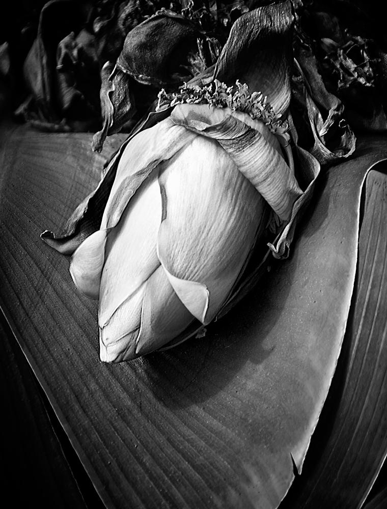 Banana-Blossom