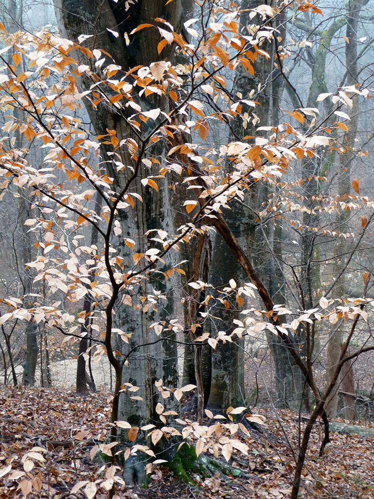 David Simonton Umstead State Park Raleigh NC