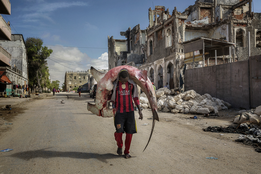 Africa, Somalia, Mogadishu. 10/10/2015. A man carries a huge hammerhead through the streets of Mogadishu. A recent escalation of plunders of Somali waters by foreign fishing vessels could mean the return of hijackings, locals warn. The country's waters have been exploited by illegal fisheries and the economic infrastructure that once provided jobs has been ravaged.