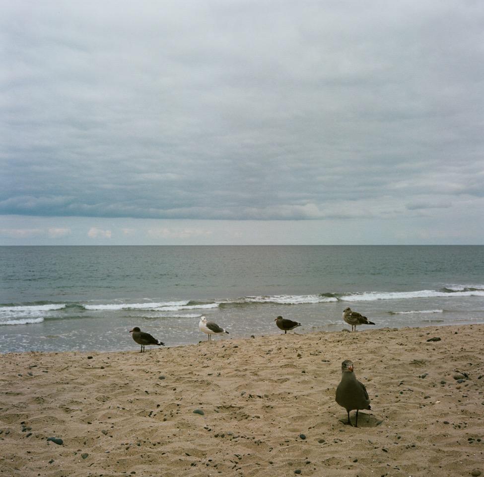 Hannah_Kozak_Torrey_Pine_State_Beach_Birds-01010009