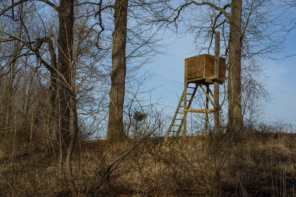 Deer Stand, Chestertown, Maryland, 2014
