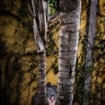 among_trees