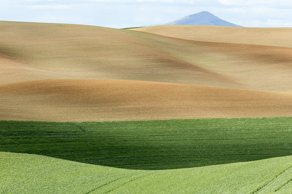 Steptoe Butte Rises Above the Wheat Fields in the Palouse. WA