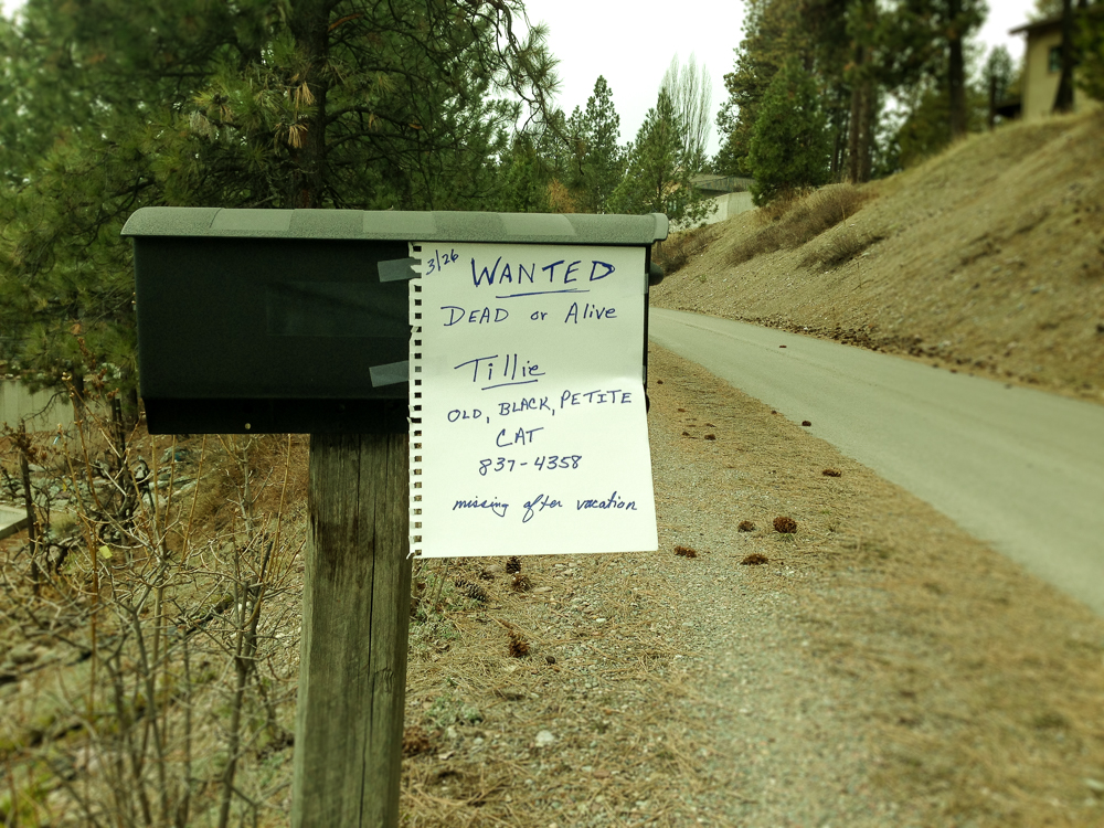 """Wanted Dead or Alive"" missing cat sign on mail box"