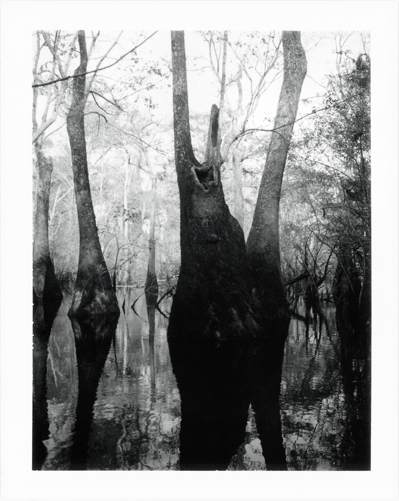 15 Untitled (Cypress Swamp), Near Ark Lodge, Spring 2017