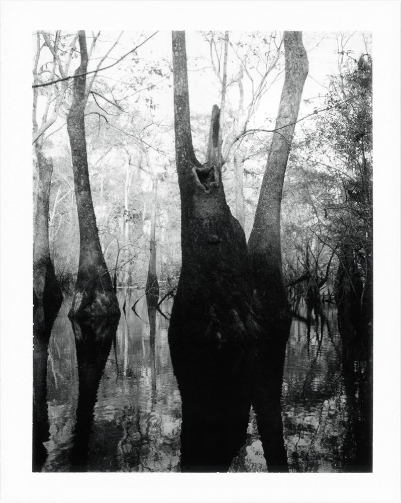 15 Untitled (Cypress Swamp), Near Ark Lodge, Spring 2017