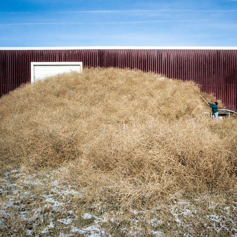 Bertha Medina removes tumbleweeds from her barn. Hanover, Colorado.