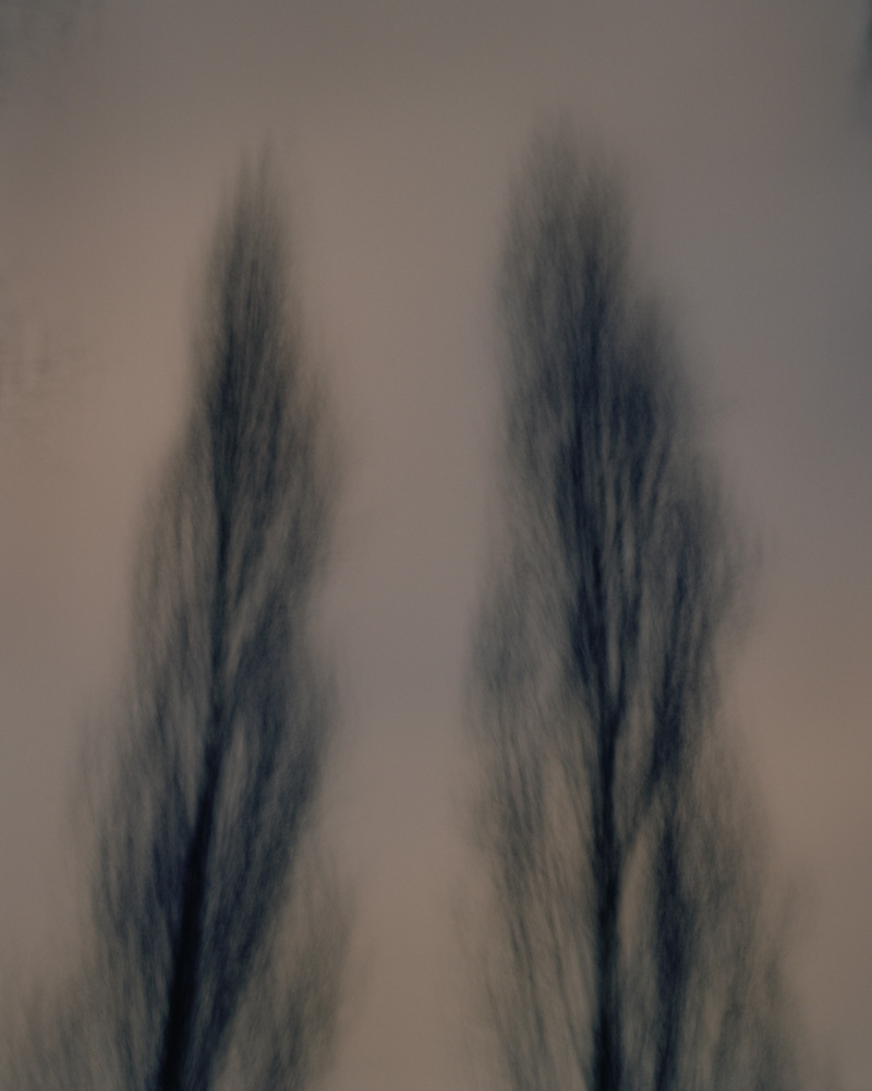 Two Poplars, Vincennes, France, 2010. From the series, Encounters. Photo © Minny Lee.