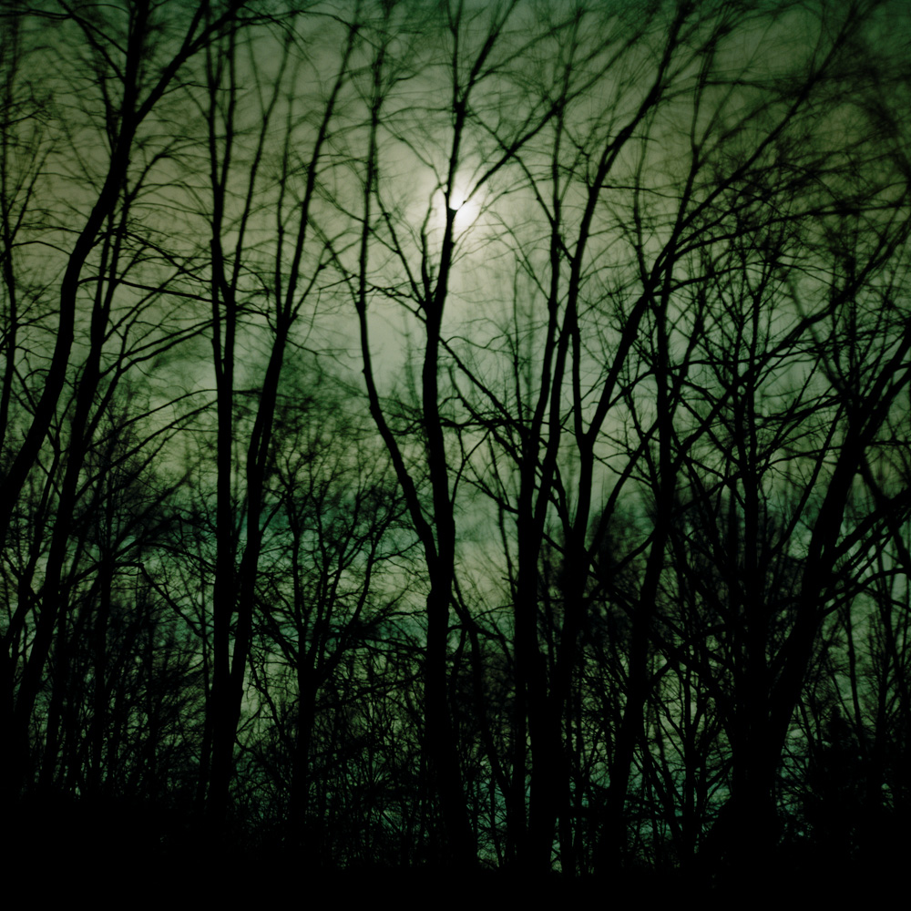 Maples in the Moonlight, New Jersey, 2009. From the series, Encounters. Photo © Minny Lee. All rights reserved.